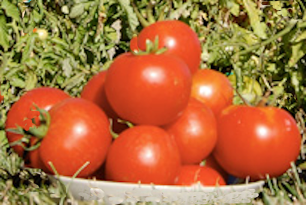 Pomodori Toscani